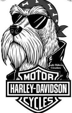 HARLEY DAVIDSON #harleydavidson #harleydavidsonsoftail