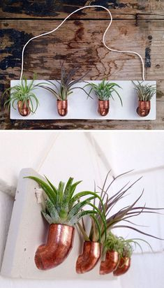 Luftpflanzen 12 Elegant Ways To Bring Air Plants Into Your Home // This copper and concrete air plan Plant Wall, Plant Decor, Wall Plant Holder, Plant Hanger, Tillandsia Usneoides, Air Plant Display, Succulent Display, Air Plant Terrarium, Garden Terrarium