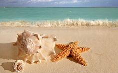 ракушка, звезда, морская, ВОДА