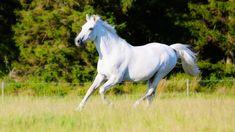 Biały, Koń, Trawa, Łąka