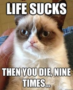 Top 40 Funny Grumpy cat Pictures #Funniest