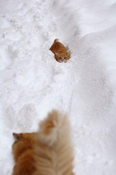 """catsbeaversandducks:  ""Ha! He'll never find me here!"" Photo by ©ranni ptace   """