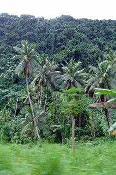 Samoa Palms