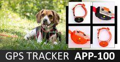 #kutya #vadászkutya #vadászat #hunter #hunting #huntingdog #kutya #dog #gps #nyomkövetés Dogs, Animals, Animales, Animaux, Pet Dogs, Doggies, Animal, Animais