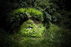 The Lost gardens of Heligan - Fabulous Traveling
