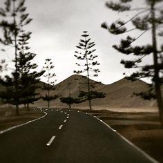Camino de pino