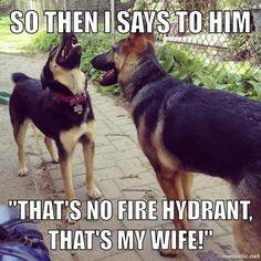 Rodney Dangerdog