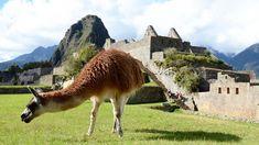 The Lost City of Machu Picchu. Best Places To Travel, Cool Places To Visit, Places To Go, Cusco Peru, Peru Travel, Lost City, Luxury Holidays, Machu Picchu, Luxury Travel
