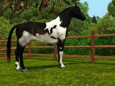 Sims 3 Horse Markings   Name: SE/LEC Whiskey Dance