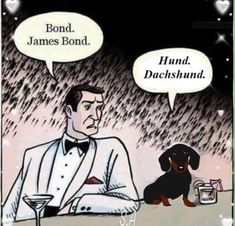 Funny Dachshund, Mini Dachshund, Dachshund Puppies, Funny Dogs, Daschund, I Love Dogs, Puppy Love, Cute Dogs, Adorable Puppies