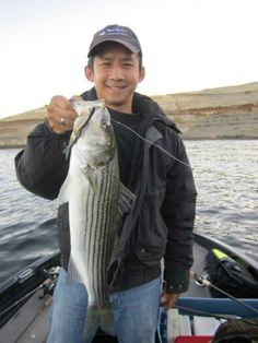 """Nice striper caught on Real Fish Bait 6"""" Summer Dancer60 rainbow trout pattern at San Luis Res, Ca. #striper #realfish"""