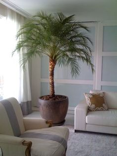 palmeira para dentro de casa - Pesquisa Google