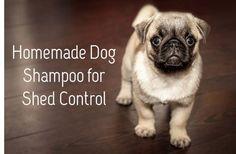 homemade dog shampoo for shed control