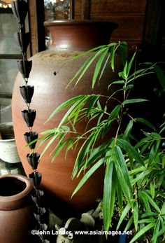 Love the large pot in small garden  Rainchain and bamboo... already too many elements.. cut it down!