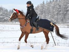"""""""Arvostan sekä ratsastajan että hevosen varusteissa eritoteen turvallisuutta, hinta-laatusuhdetta ja käytännöllisyyttä. Pidän varusteista, jotka ovat klassisen kauniita ja sopivat monen tyyppiselle kantajalle. Klassiseen ja jopa vähän ajattomaan tyyliin on lisäksi kiva yhdistellä erilaisia elementtejä, kuten kiiltonahkaa ja timantteja. Lahjalistani koostuukin varusteista ja tavaroista, joissa edellä mainitsemani ominaisuudet kohtaavat toisensa. Hauskaa joulua!"""" Katso Siirin joululahjavinkit!"""
