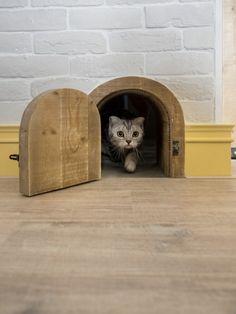 Minha Casa Container Curte gatos? E decoração industrial? Então este loft é para…