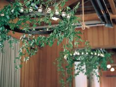 Iron Chandeliers With Greenery.  We can duplicate with hoola hoops !
