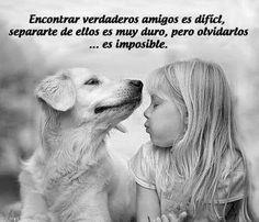"""""""Encontrar verdaderos amigos..."""" - Todos los Animales tienen Emociones - GEDVA - Google+"""