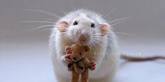 тедди крыс: 24 тыс изображений найдено в Яндекс.Картинках