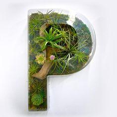 Typographie Décorative Murale Faite de Plantes et de Mousse