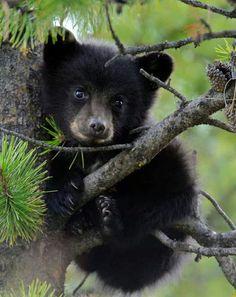 Little Bear....