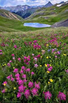 """Wildflowers in the San Juan Mountains (Colorado).  Have a great weekend! Today is the last chance for the metal print deal... 20"""" x 30"""" metal prints for $200. Free UPS Ground Shipping. Only until Friday March 10th. Please message me if I need to add a specific photo that you are interested in. Get them here: http://www.larsleber.sale/  Feel free to like, share, or comment. Thank you for looking and for liking Lars Leber Photography!"""