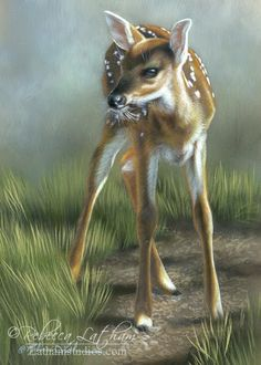 Fawn painting by Rebecca Latham