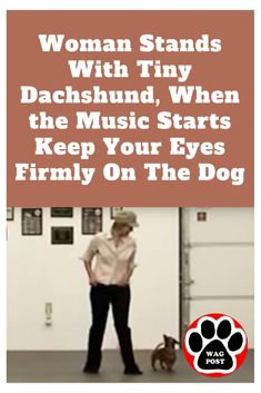 Meet Emily and Henrietta, the cutest dancing duo around. Funny Dachshund, Mini Dachshund, Dachshund Puppies, Pet Dogs, Dachshunds, Beagles, Funny Dogs, Funny Animal Pictures, Cute Funny Animals