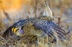 native birds of nebraska