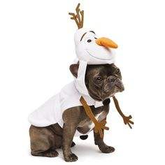 Put your pup in a Frozen costume for Halloween this year!