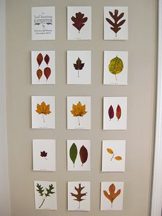 DIY Leaves on Card Stock Leaf Projects, Fall Projects, Projects To Try, Auction Projects, Autumn Crafts, Nature Crafts, Plant Crafts, Crafts For Kids, Arts And Crafts