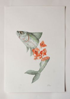 Georgina Taylor - The salmon-coloured flesh of Sammi the fish merges with the blush-coloured petals of a bouganvillea.