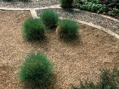 Pea gravel is useful for walkways, work areas and social spaces. It also  fits easily among plants and shrubs and will stay attractive for a long  time. Combine pea gravel with ornamental grasses for a stunning design.