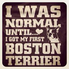 Sad but true. Boston Terriers, Toy Fox Terriers, Boston Terrier Love, Boston Art, New Boston, Chihuahua, Springer Spaniel, English Bull, Puppy Love