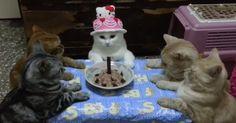 シュールすぎる30秒www 飼い主さんの歌声だけが響きます…kitty birthday party...<3 the Hello Kitty hat! Hope they have more food.