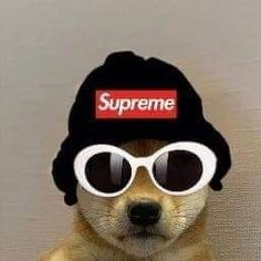 Gamer Pics, Dog Icon, Rapper Art, Rap Wallpaper, Naruto Oc, Dog Memes, Animal Memes, Doge, Parks