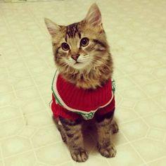 This fashionable feline.