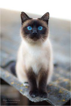 CyBeRGaTa - Cats, Memes, New Mexico                                                                                                                                                                                 More