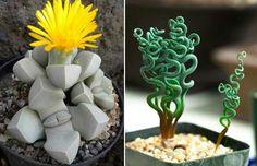 16 bijzondere planten waarvan je bijna zou denken dat ze nep zijn
