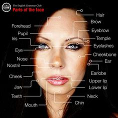 On this page you will find an infographic that shows you the parts of the face in English.