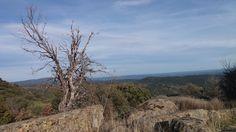 Árboles y cerros (4)