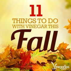 Looking for a weekend project? Here are 11 things to do with vinegar this fall you probably hadn't thought of before!