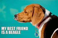 My beagle is my soulmate 4ever.