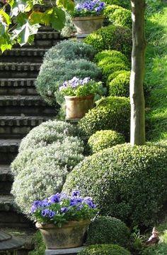 Garden steps & Boxwood combination