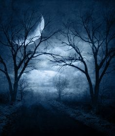 Moonlit night, moon, winter trees, isolated, night .... Premade BG 96, by~Brenda Starr~via Flickr.