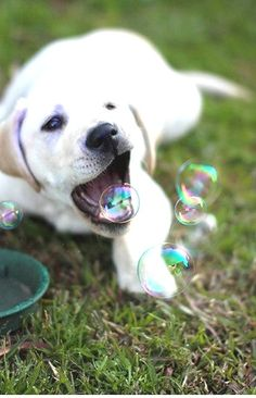 Cute doggie playing with the bubbles!