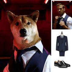 Film Fashion: Only Dog Forgives #mensweardog #menswear #dog #shiba #fashion #dapper #ryangosling