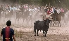 """'We're a violent nation' – director tackles Spain's festival culture of animal cruelty. Every year about 60,000 animals are killed during these festivals, often held in honour of a local saint or the Virgin Mary. """"I never once saw anyone object. Everyone goes, they take their children. These cruel events have the church's blessing."""" -- Both the Old and New Testaments advocate and condone the killing of animals as a religious sacrifice."""