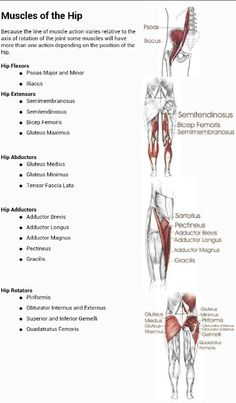 Muscles of the hip and their actions. Repinned by SOS Inc. Resources @so siu ki Inc. Resources.