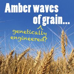 No More Field Trials for Unapproved GMO Crops - Food & Water Watch